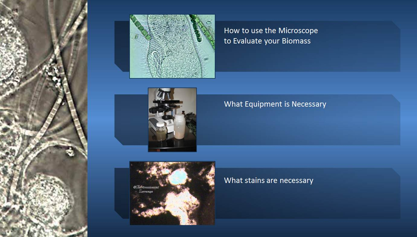 Using the Microscope