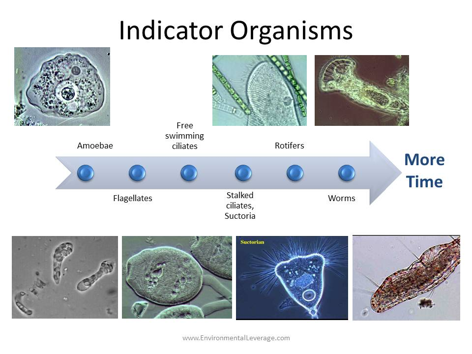 Indicator Organisms in Wastewater